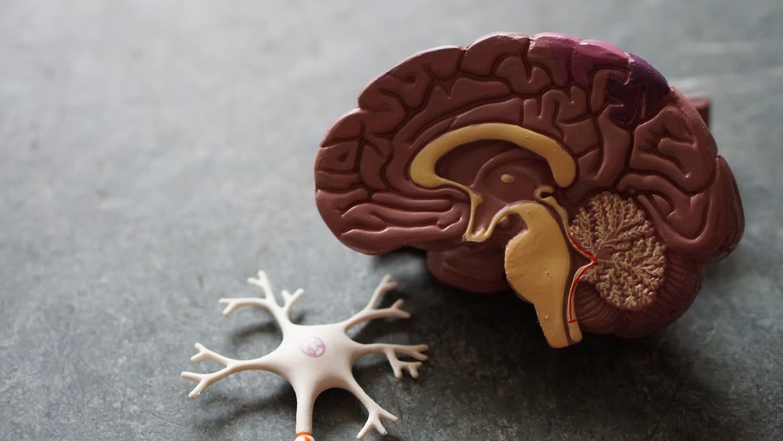 Come i profumi agiscono sul nostro cervello